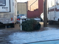 The winds can get pretty strong here in Golden. Guess we better tie the tree down a little tighter!